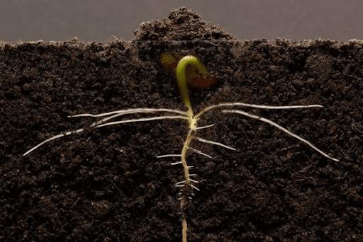 những điều kiện bên ngoài và bên trong nào cần cho hạt nảy mầm