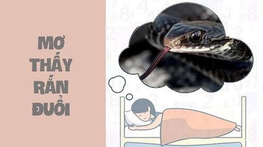 Mơ thấy rắn đuổi theo