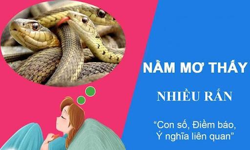 Ý nghĩa giấc mơ thấy nhiều rắn